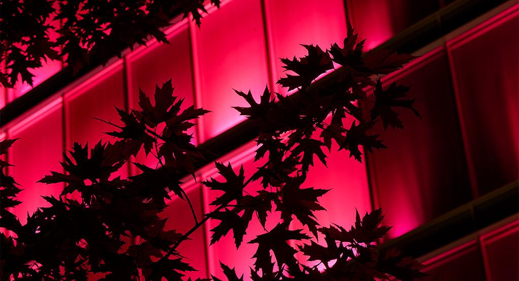 Gros plan sur la façade illuminée du bâtiment Amandolier de la SPG